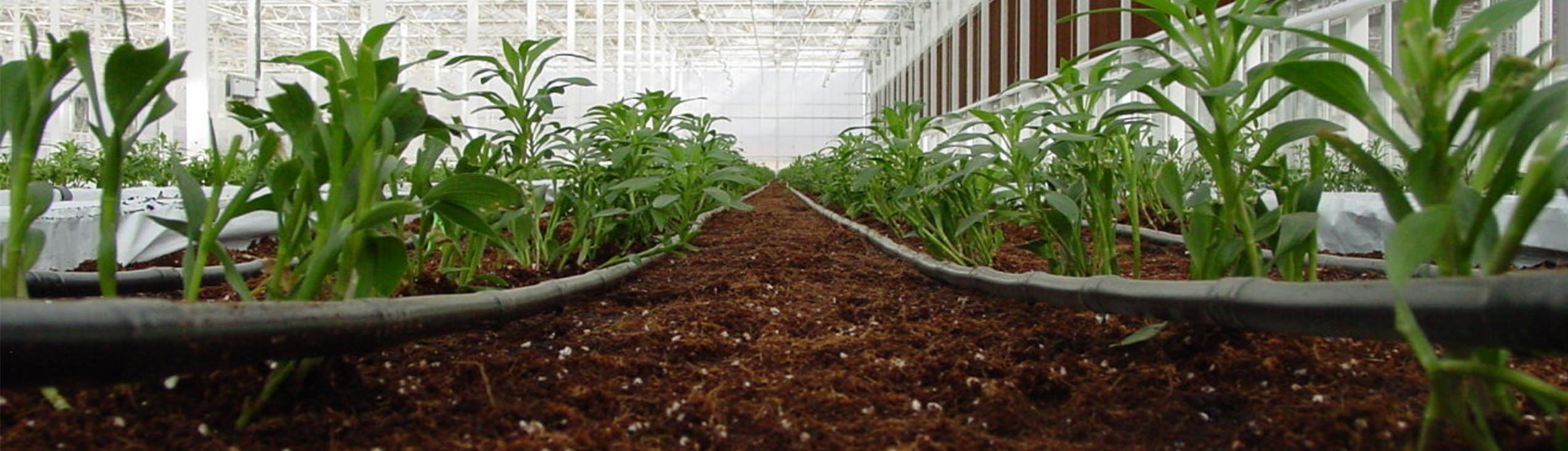 Tropfbewässerung für Kulturen von der Green Fox Service AG