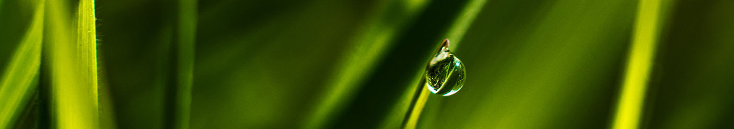 Goutte d'eau sur une plant symbolisant l'arrosage