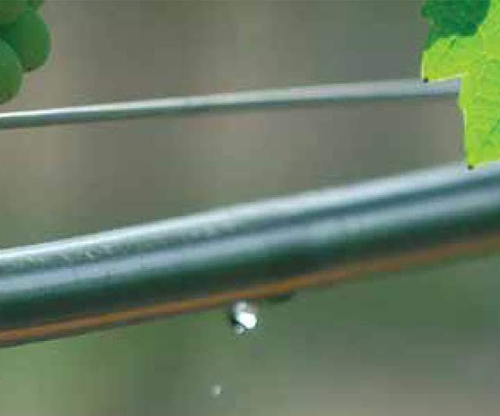 Tropfbewässerung von Netafim mit Tropfschläuchen in einem Rebbau